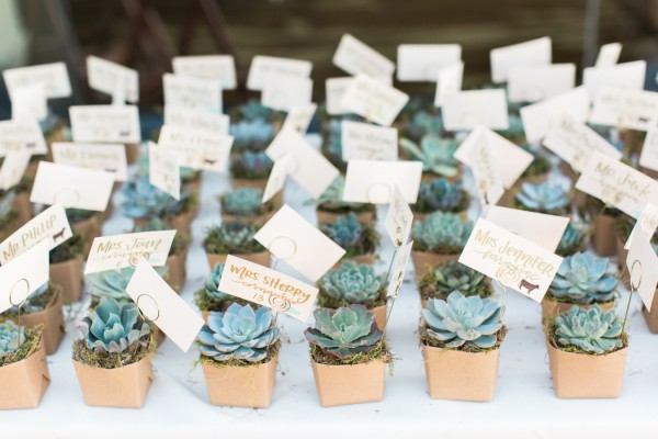 Green Manatee | Never Hug a Manatee | About Us | Eco wedding favours and gifts | Succulents