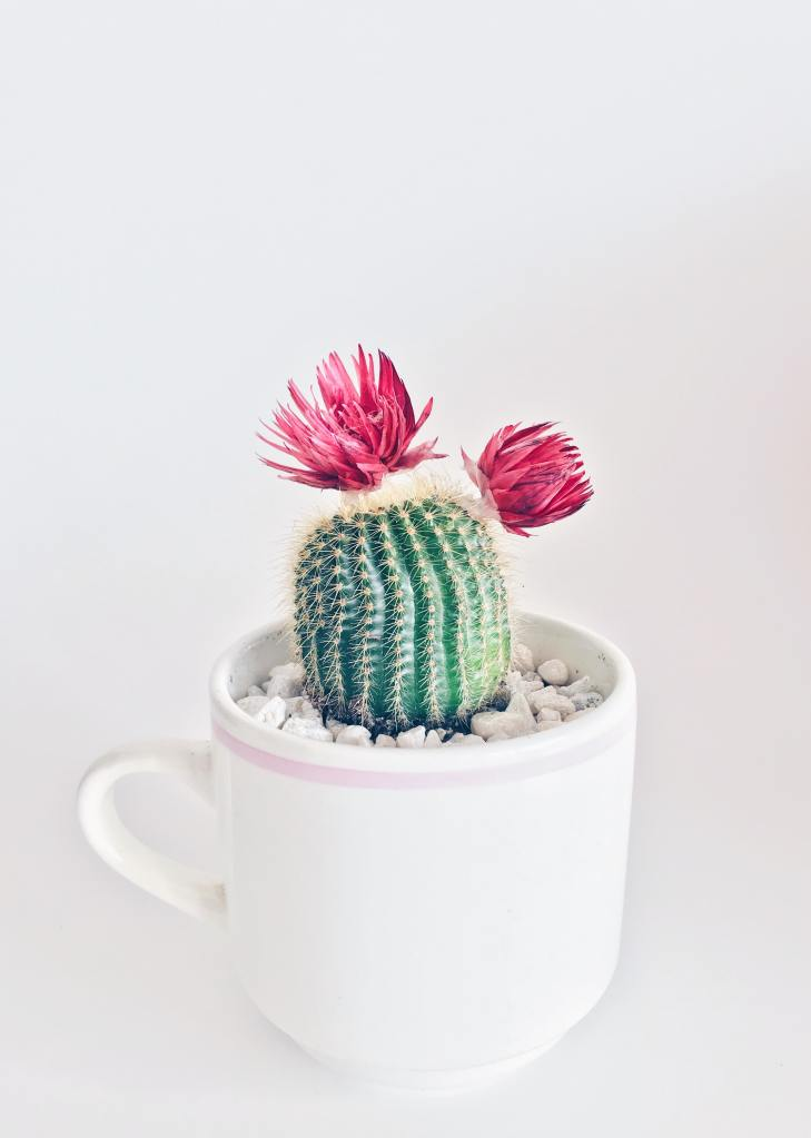 Green Manatee how to create less waste for your wedding plants in cups as wedding favours
